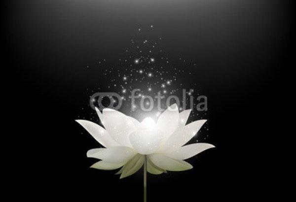Цветы картины на черном фоне019