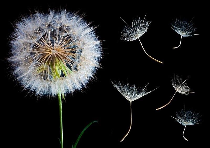 Цветы картины на черном фоне020