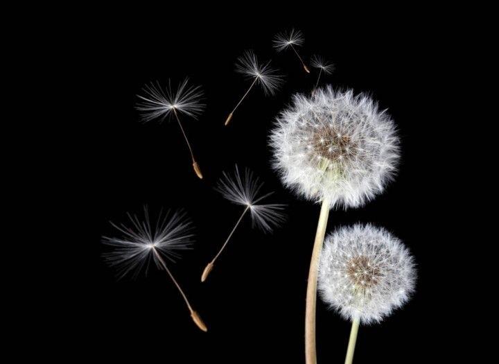 Цветы картины на черном фоне023
