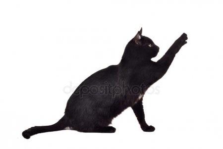 Черно-белый силуэт кошки007
