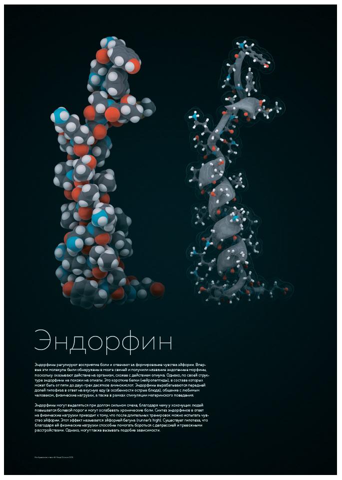 Эндорфин картинки прикольные и интересные (11)