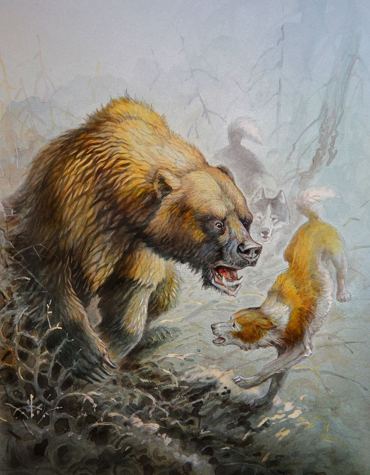 картинка охота на медведя с собаками вас