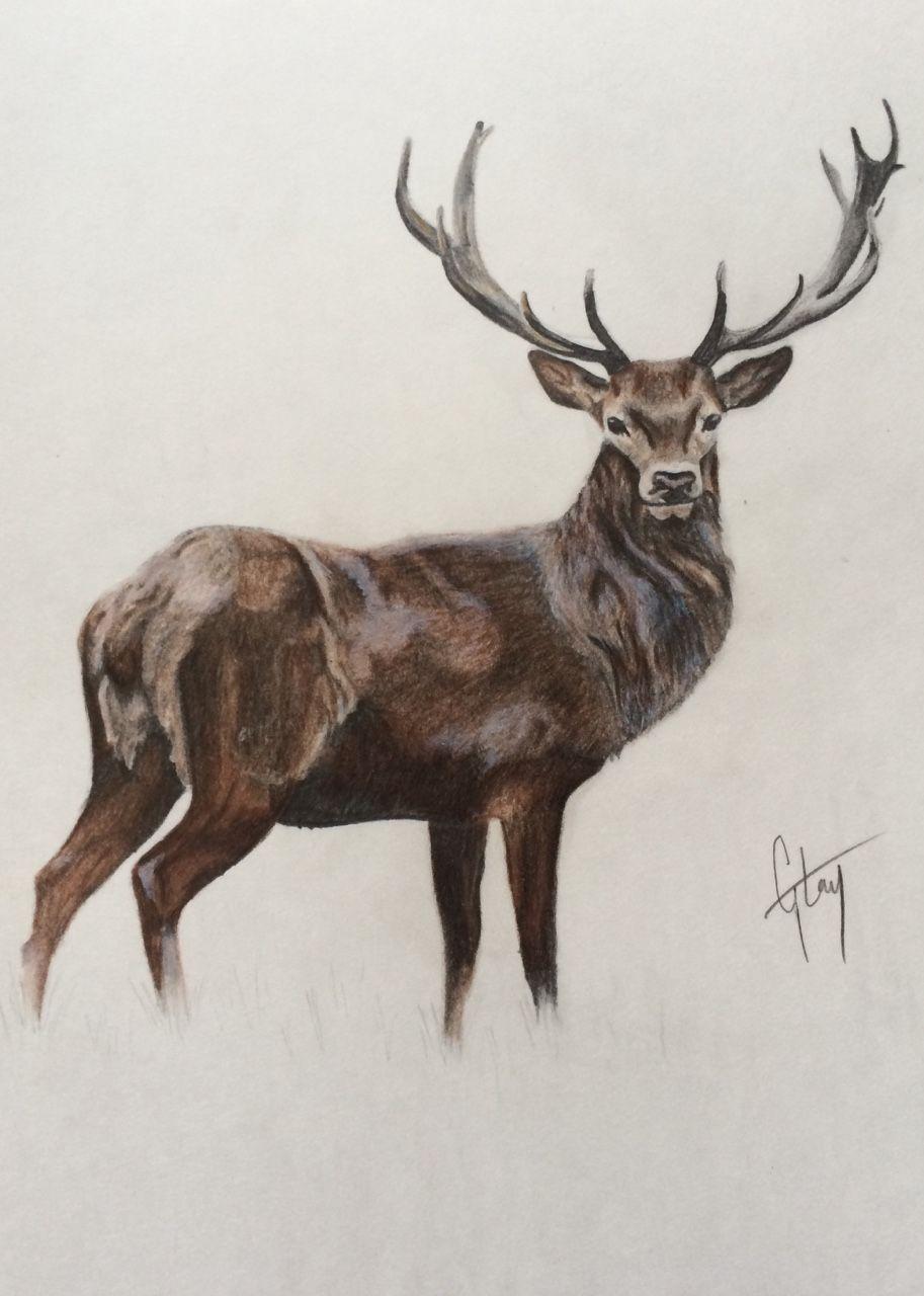 Эскизы на тему охота   сборка изображений (24)