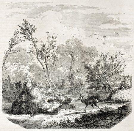 Эскизы на тему охота - сборка изображений (5)