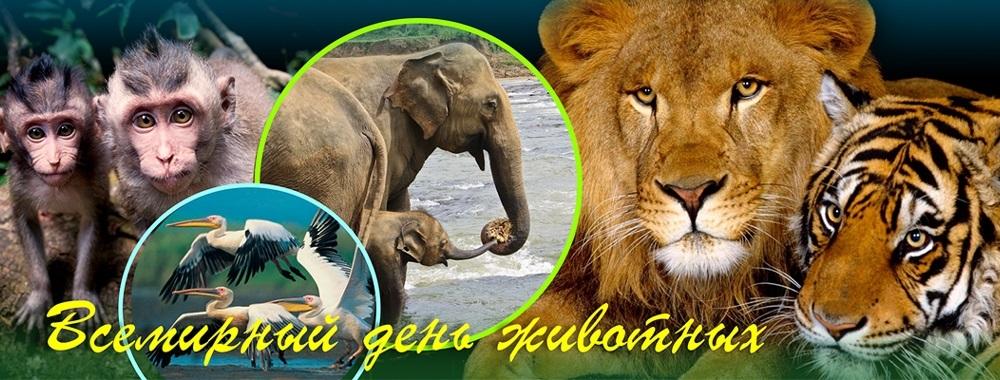 4 октября Всемирный день животных007