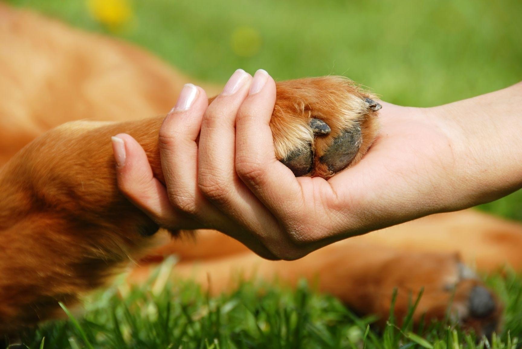 4 октября Всемирный день животных011