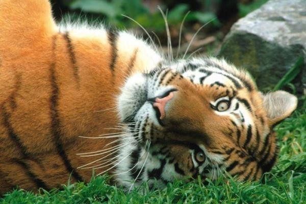 4 октября Всемирный день животных015