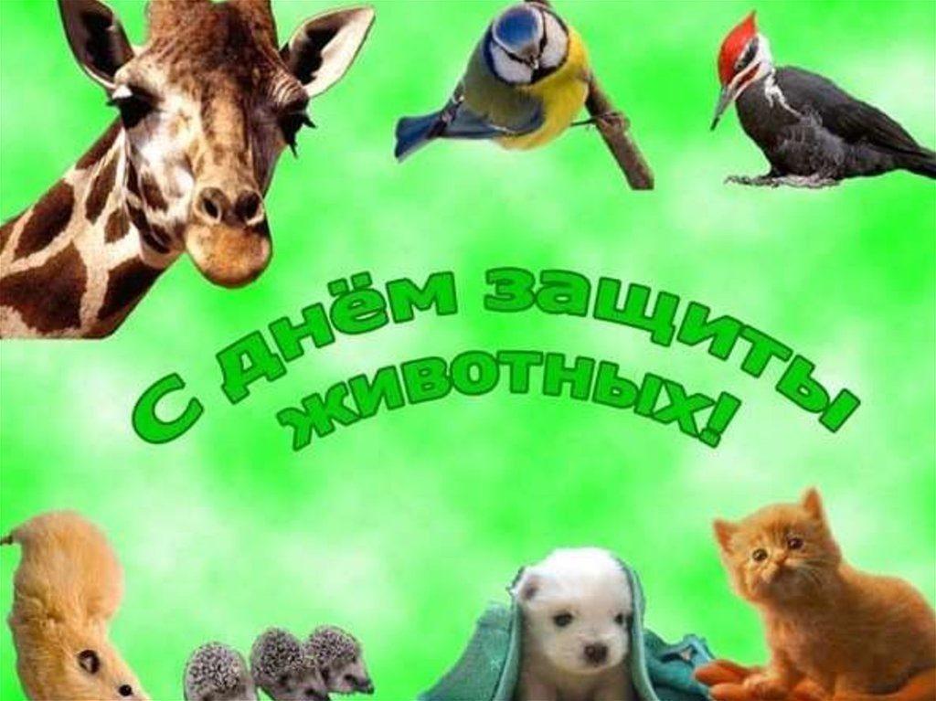 4 октября Всемирный день животных017
