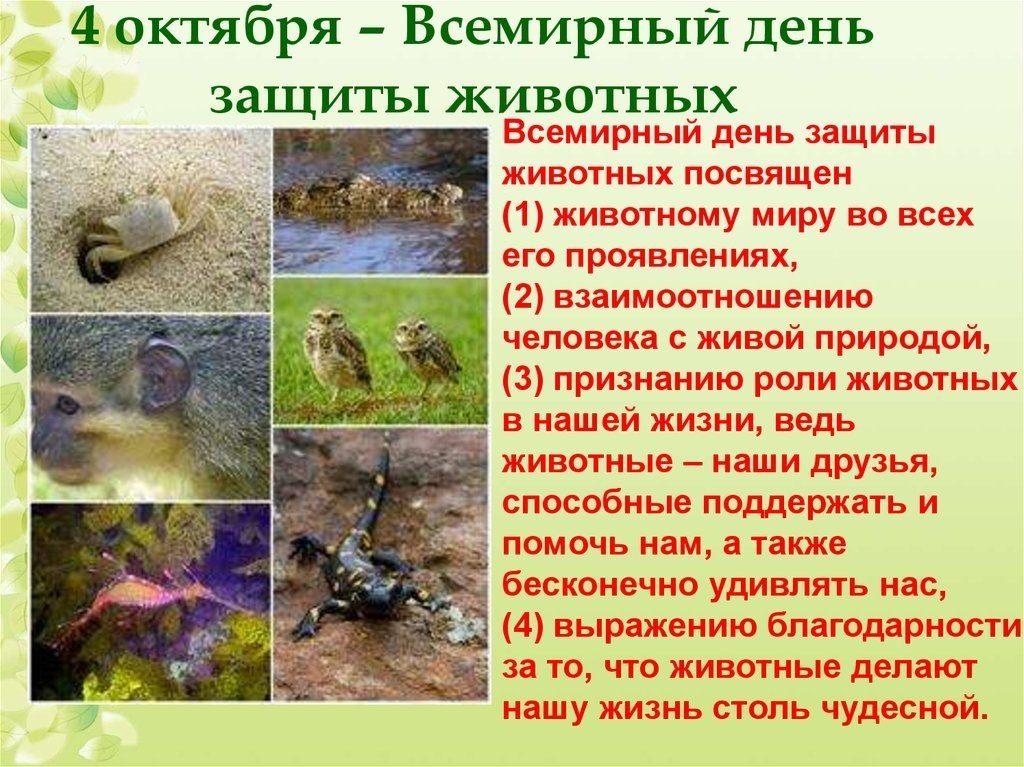 4 октября Всемирный день животных021