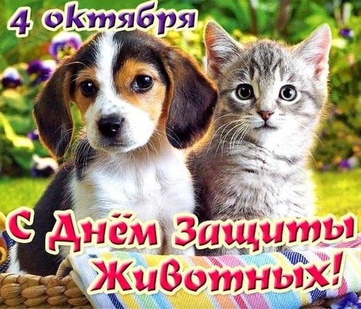 4 октября всемирный день защиты животных картинки002