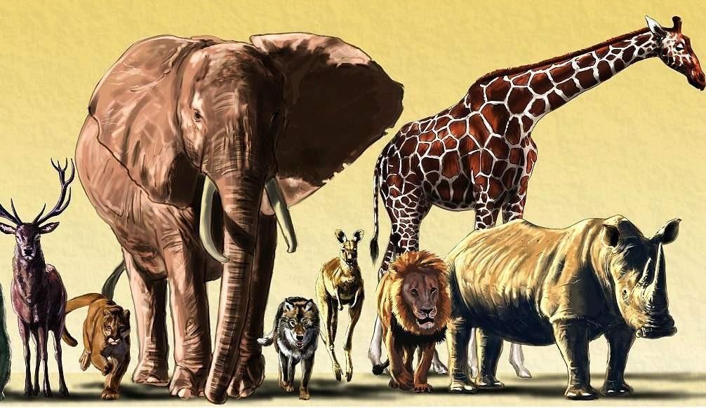 4 октября всемирный день защиты животных картинки007
