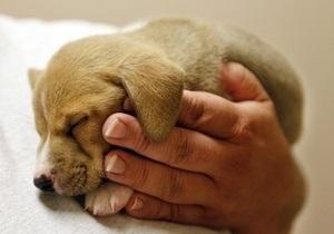 4 октября всемирный день защиты животных картинки012