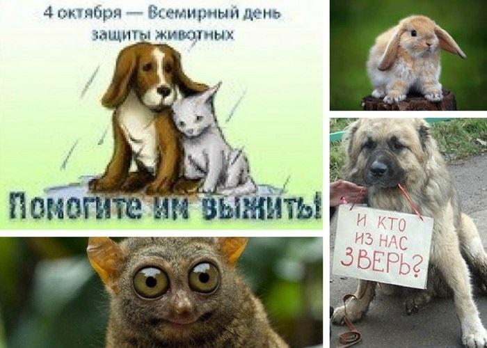 4 октября день защиты животных картинки004