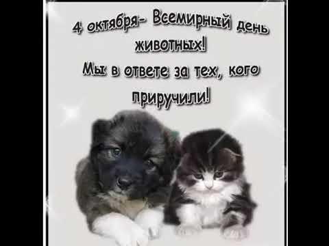 4 октября день защиты животных картинки015