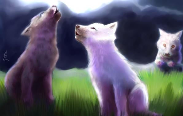 Волчата арт картинки001