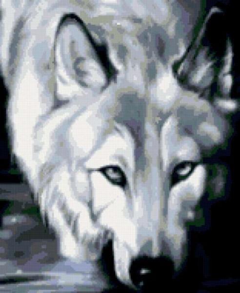 Волчата арт картинки005