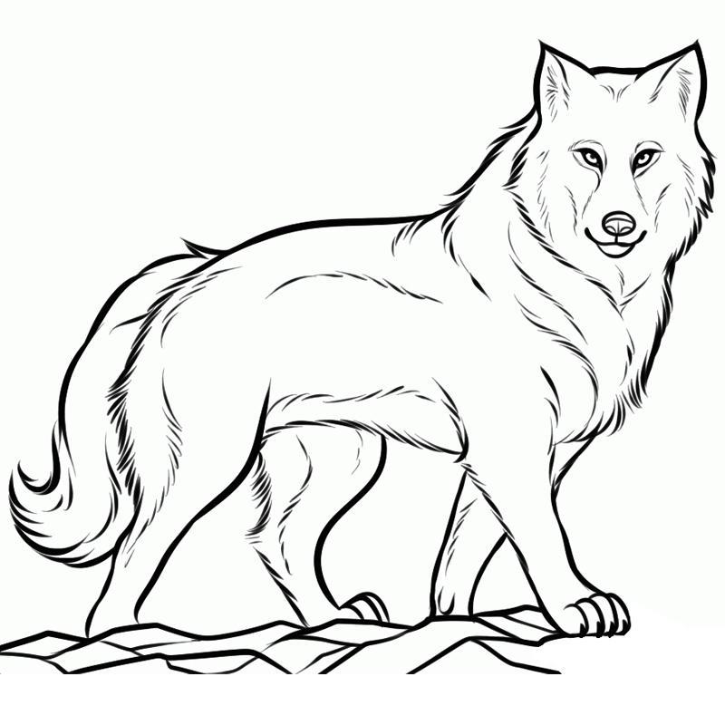 Волк картинка для детей нарисованные карандашом