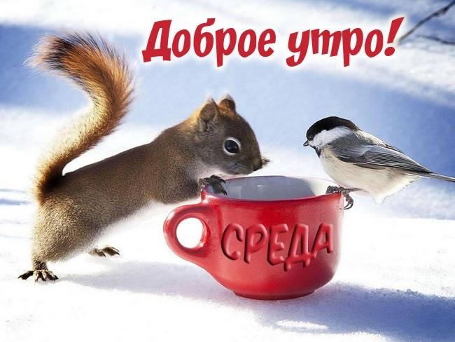 Доброе утро среда прикольные картинки019