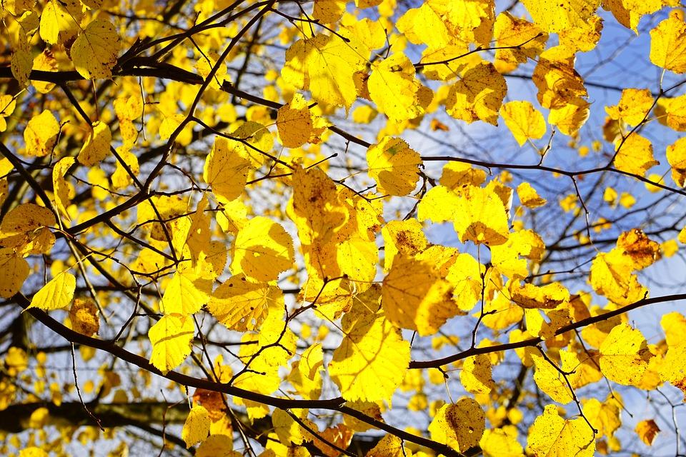 Золотого октября картинки со словами (1)