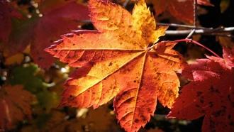 Золотого октября картинки со словами (7)