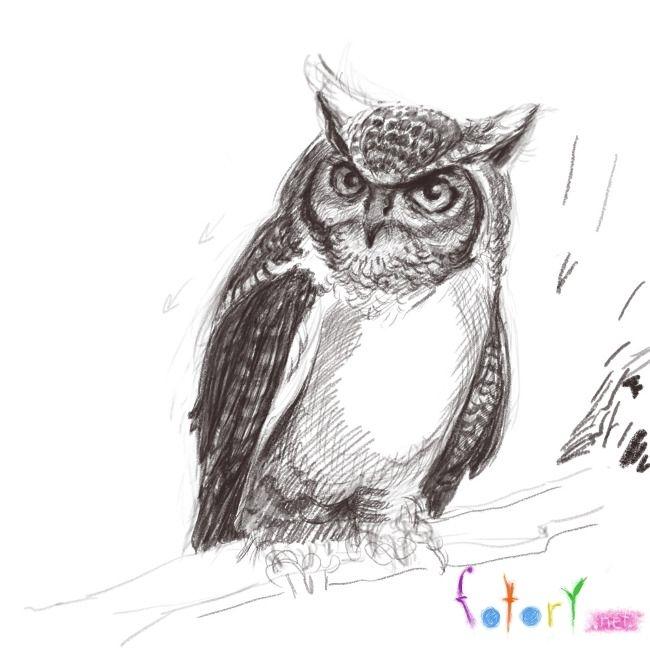 Картинки и рисунки карандашом сова001