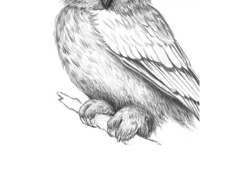 Картинки и рисунки карандашом сова008