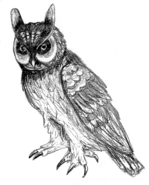 Картинки и рисунки карандашом сова009