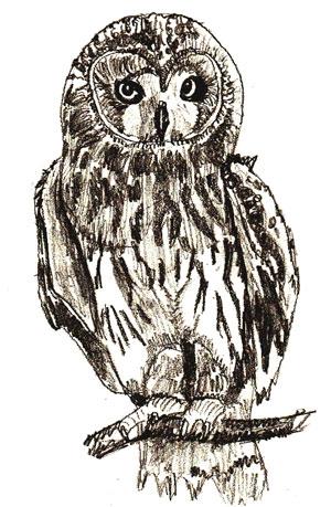 Картинки и рисунки карандашом сова010