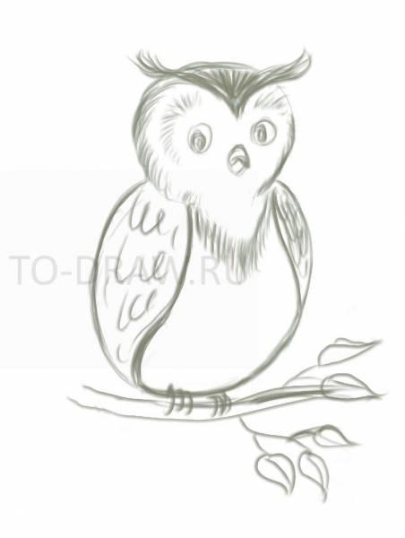 Картинки и рисунки карандашом сова012