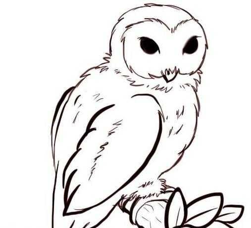 Картинки и рисунки карандашом сова014
