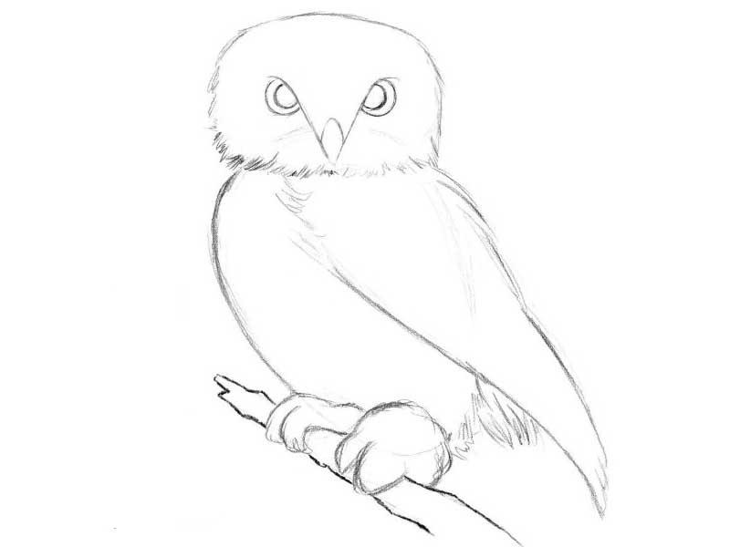Картинки и рисунки карандашом сова016