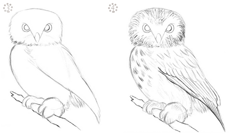 Картинки и рисунки карандашом сова018