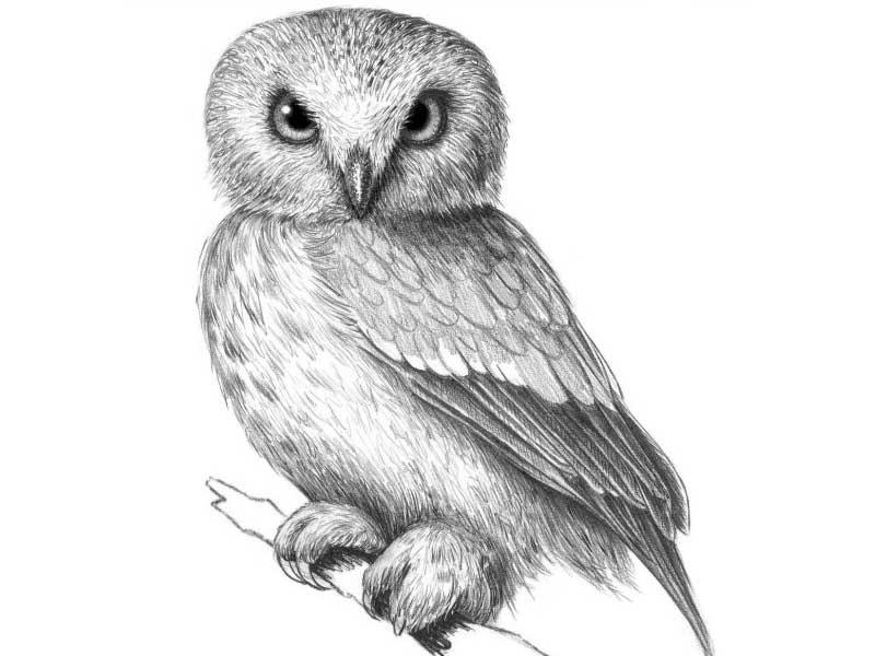 Картинки и рисунки карандашом сова020