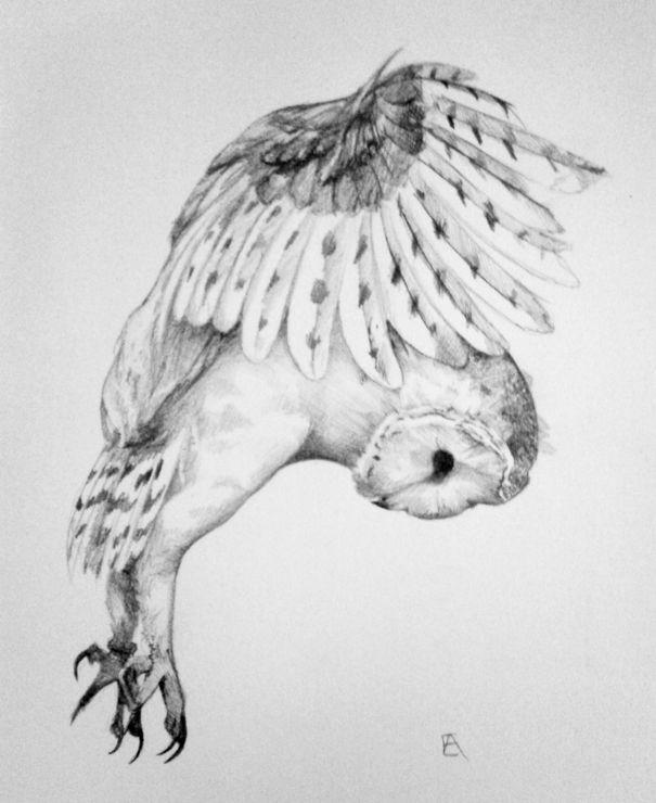 Картинки и рисунки карандашом сова021