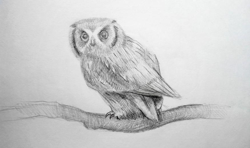 Картинки и рисунки карандашом сова022