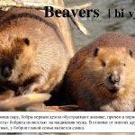 Картинки и фото на День европейского бобра (Eurasian Beaver Day)