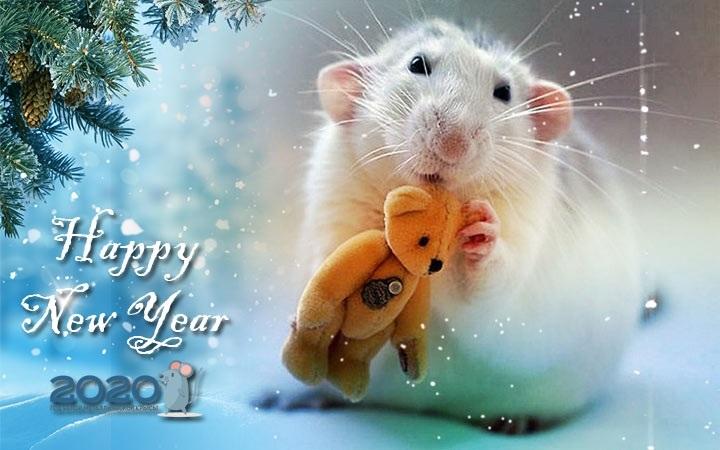 Картинки крыски на Новый год 2020003