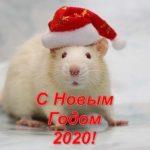Картинки крыски на Новый год 2020