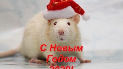 Картинки крыски на Новый год 2020007