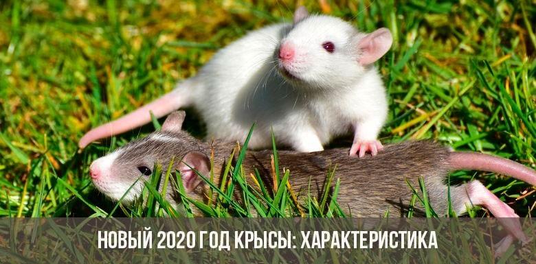 Картинки крыски на Новый год 2020009