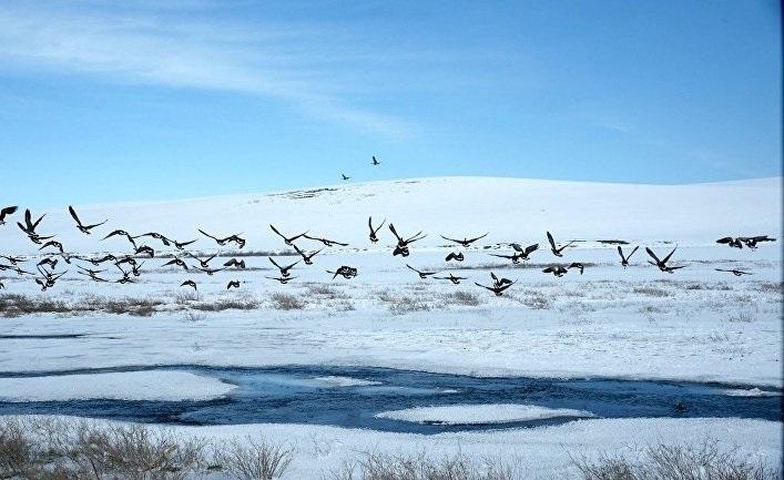 Картинки на День Аляски002
