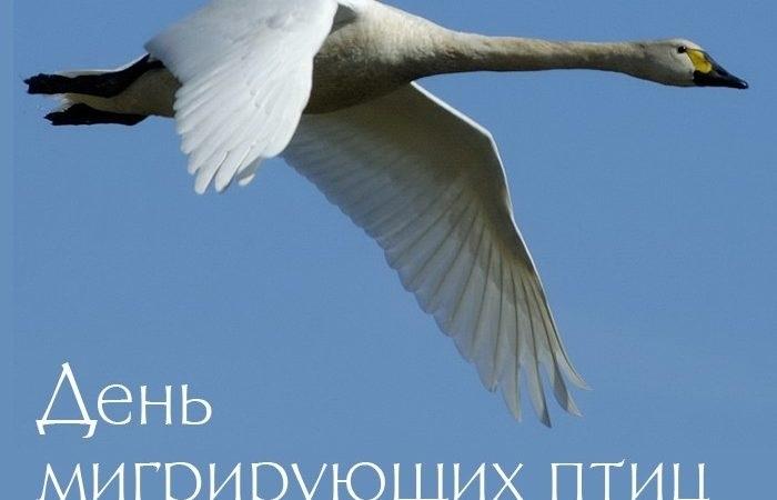 Картинки на день мигрирующих птиц001