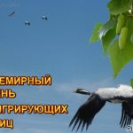 Картинки на день мигрирующих птиц