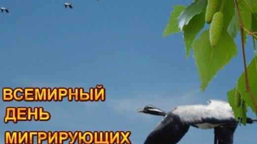 Картинки на день мигрирующих птиц002