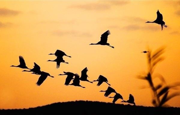 Картинки на день мигрирующих птиц004