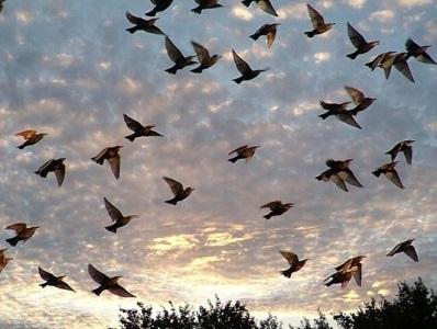 Картинки на день мигрирующих птиц005