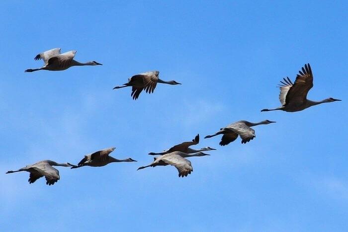 Картинки на день мигрирующих птиц006