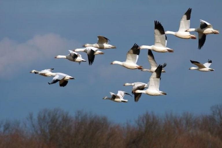 Картинки на день мигрирующих птиц007