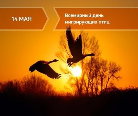Картинки на день мигрирующих птиц009