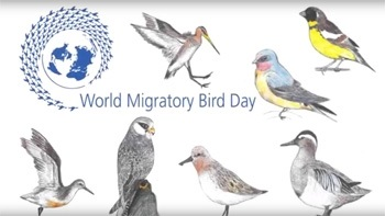 Картинки на день мигрирующих птиц011